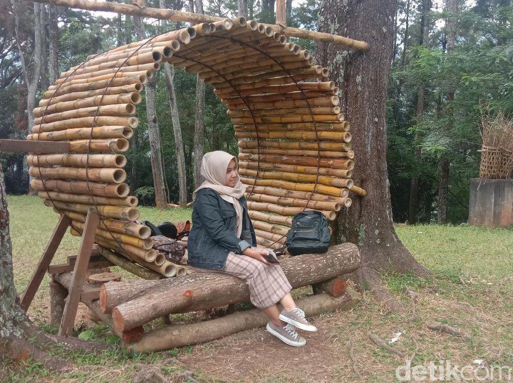 Foto: Hutan Pinus di Lereng Muria yang Cocok Buat Liburan di Kudus