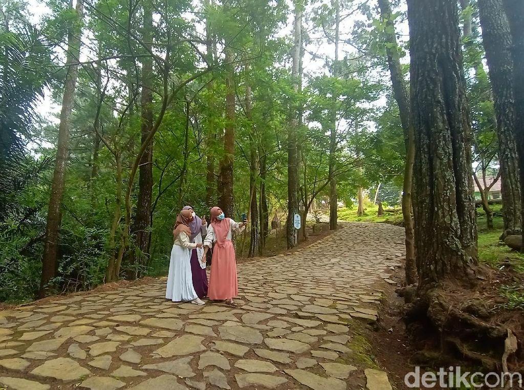 Asyik! Ada Wisata Baru di Kudus, Hutan Pinus Kajar di Lereng Muria