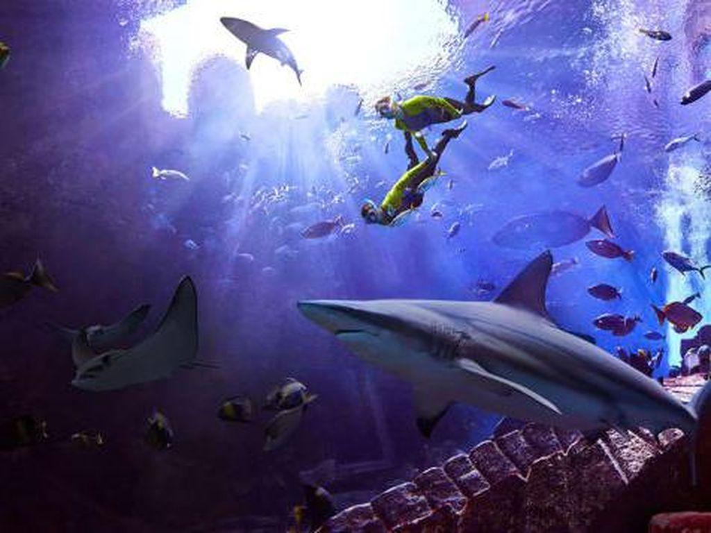 Nyeleneh Banget, RS Ini Bukan untuk Manusia, Tapi Ikan