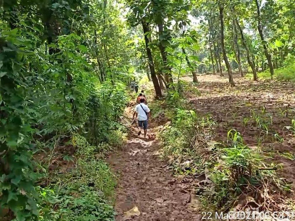 Tolong! 2 Bocah Hilang Diduga Saat Cari Bunglon di Hutan Pemalang