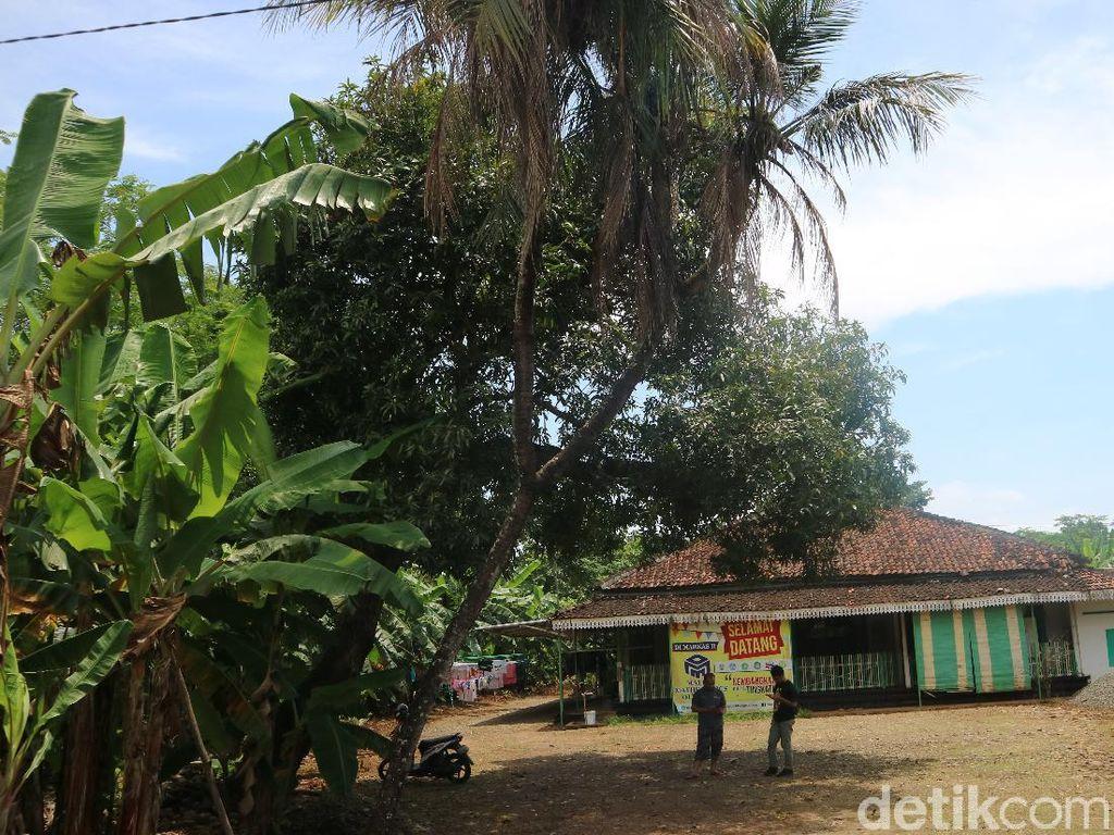 Ada Pohon Kelapa Bercabang 9 di Jepara, Dipercaya Bisa Obati Korban Santet