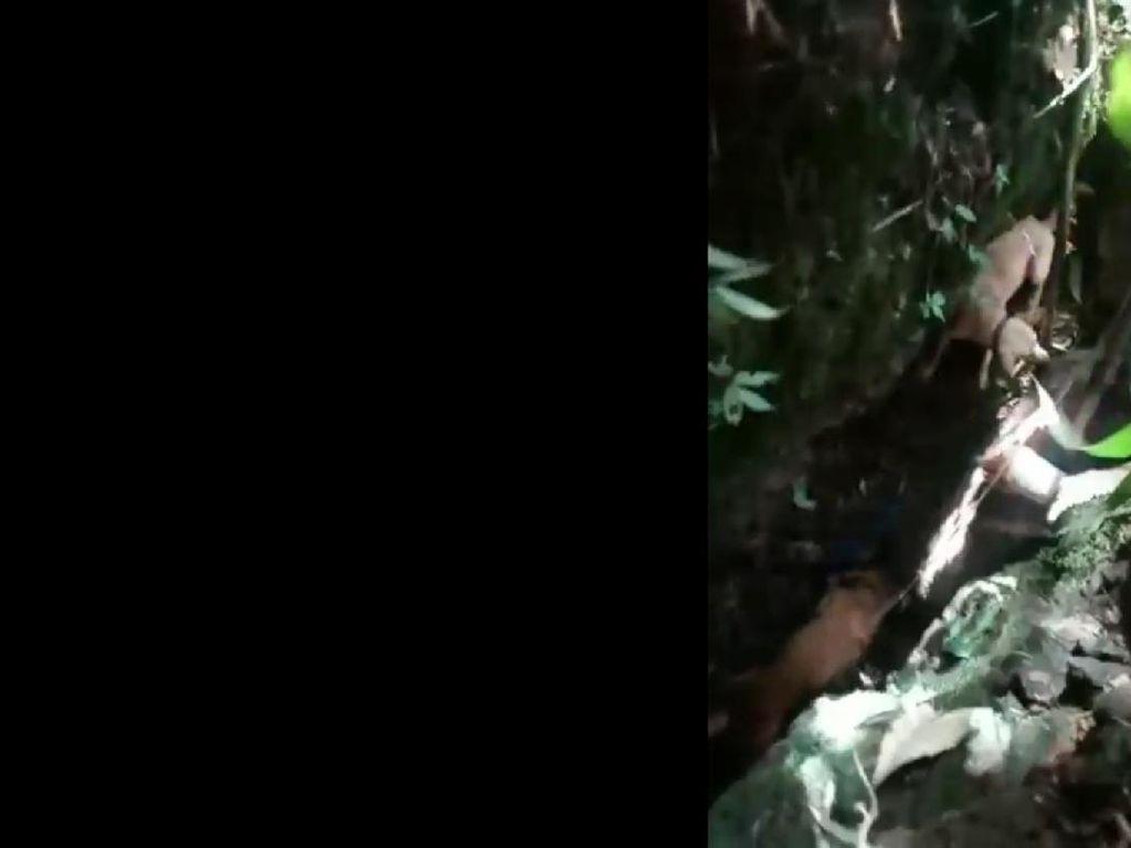 Diserang Babi Hutan, Seorang Warga Tasik Luka Parah