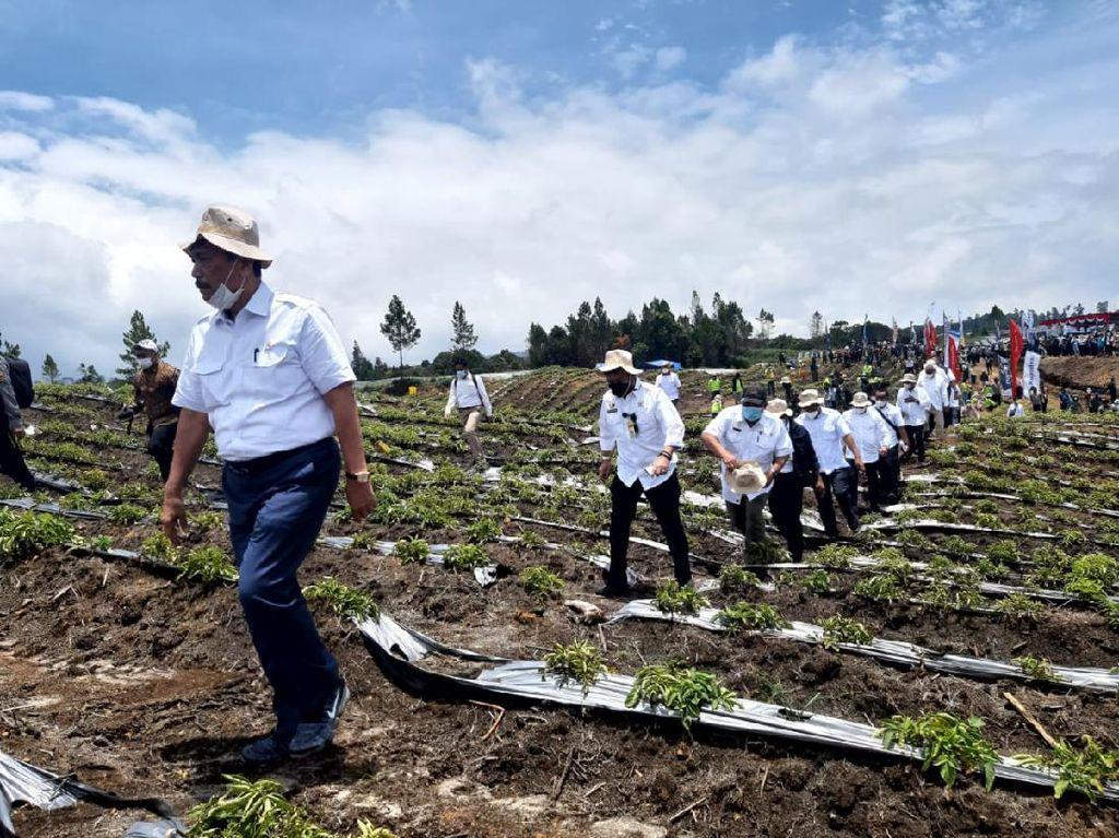 Hasil Food Estate Humbahas Memuaskan, Luhut Minta Lahan Diperluas