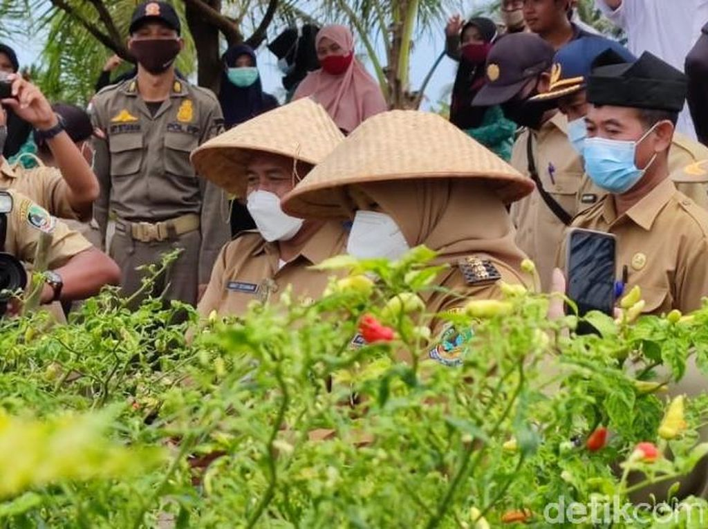 Banyuwangi Bangun Smart Green House Cabai Rawit Antisipasi Harga Melonjak Lagi