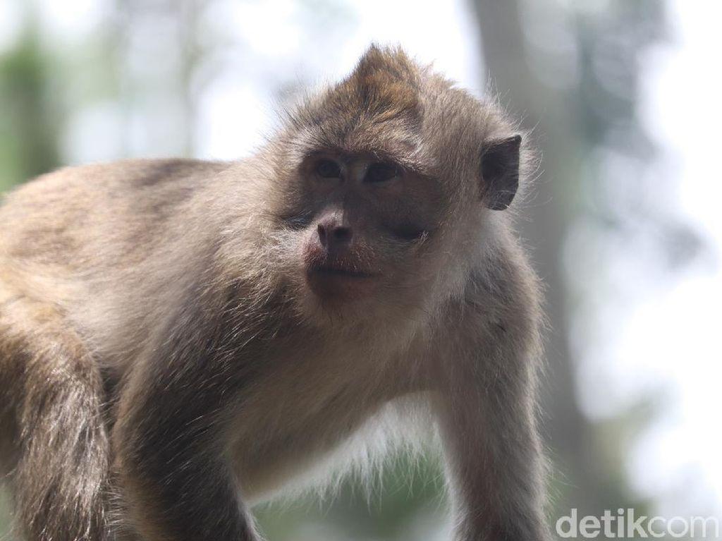 Fakta-fakta Virus Monkey B yang Muncul di China, Gejala dan Bahayanya