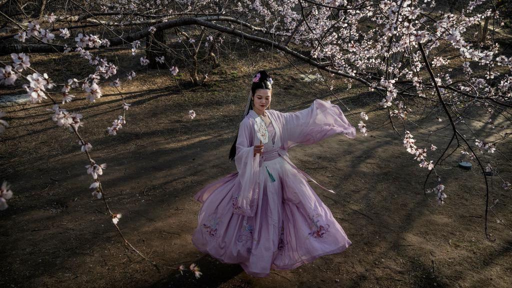 Pesona Bunga Sakura Bermekaran di Berbagai Negara
