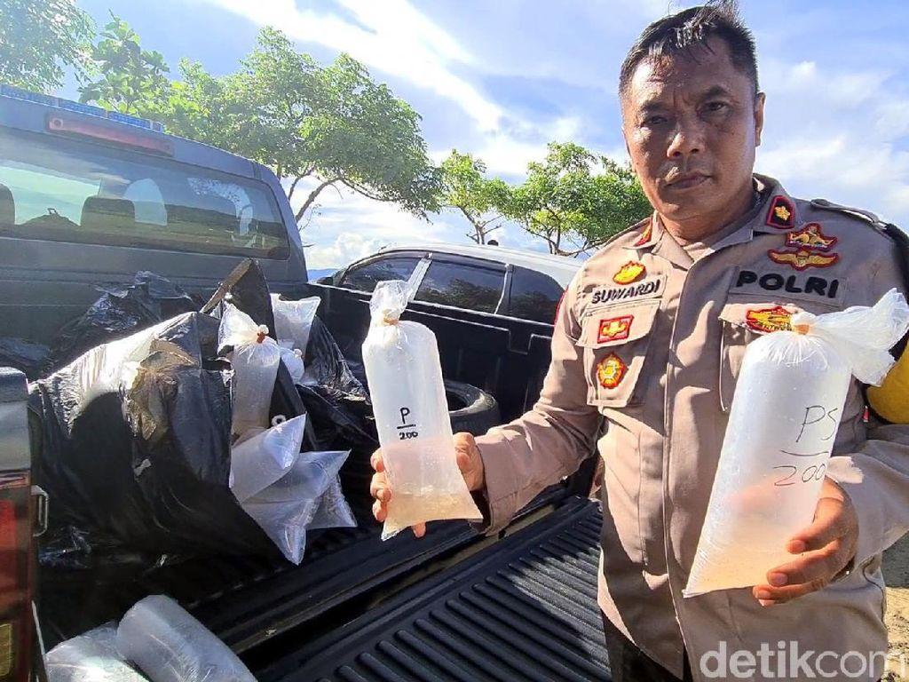 Dua Warga Ditangkap Terkait Kepemilikan 18 Ribu Benur di Sukabumi