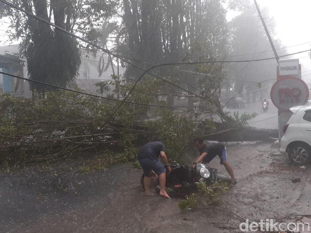 Pohon Tumbang Saat Hujan Deras di Jember Timpa Pengendara Motor