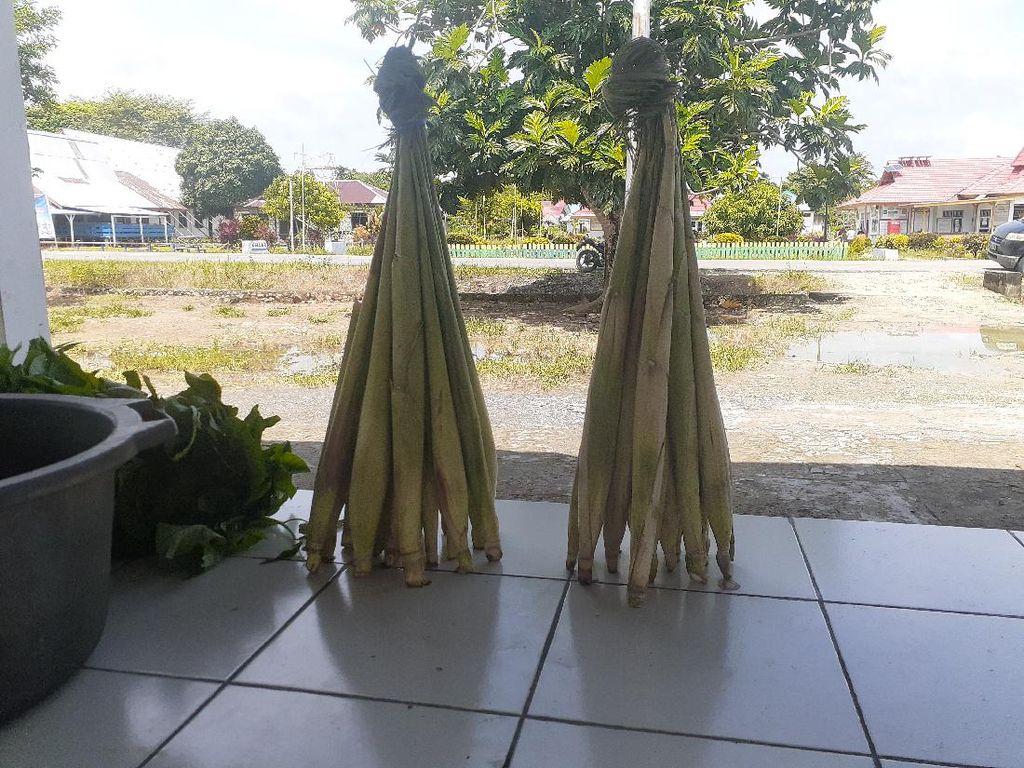 Kisah Sayur Lilin yang Unik tapi Lezat dari Papua