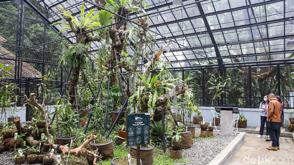 Potret Taman Tematik Baru di Kebun Raya Bogor