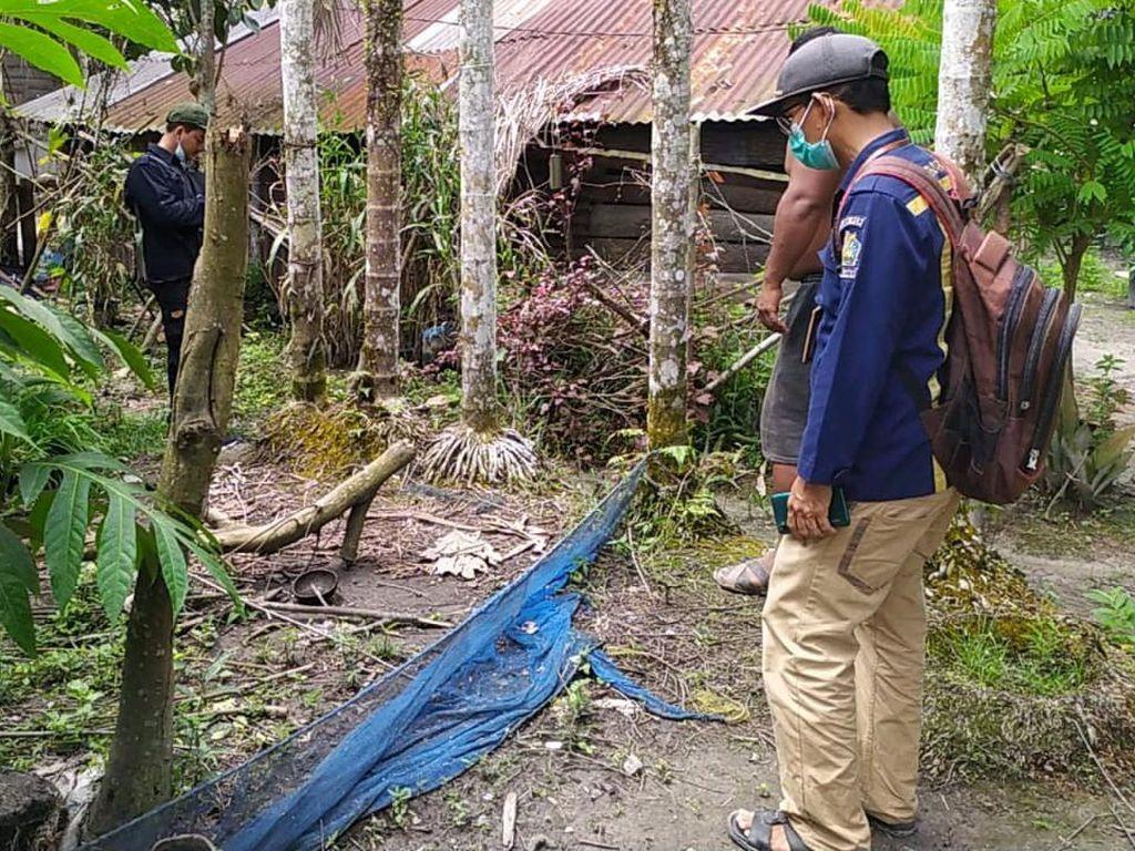2 Beruang Madu Masuk Permukiman Penduduk di Riau, BKSDA Turun Tangan