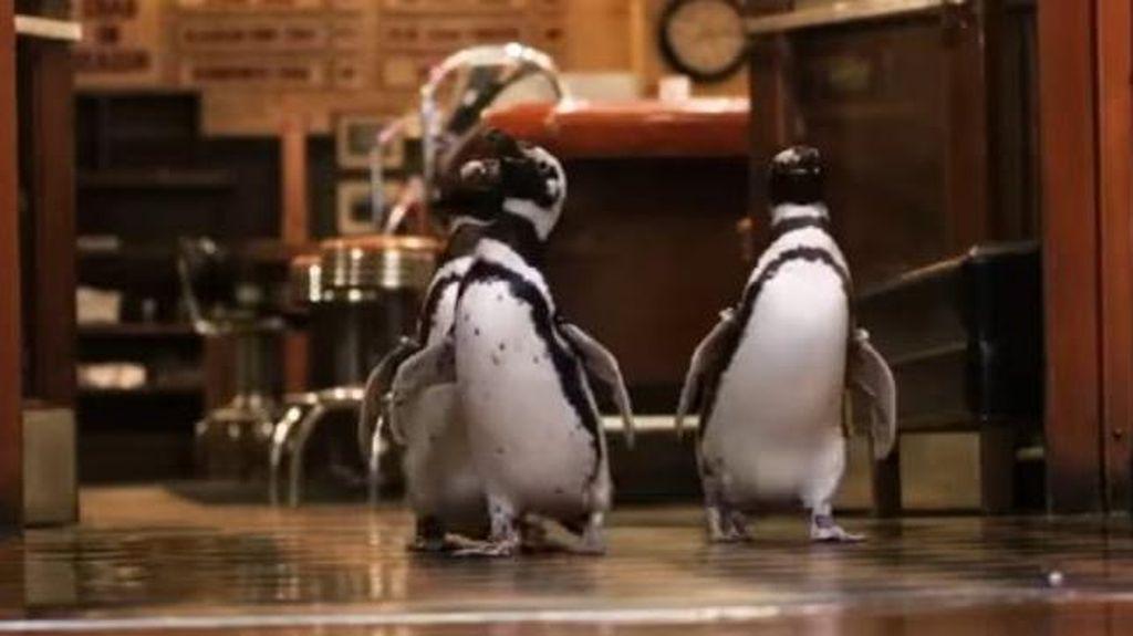 Foto: Trio Penguin yang Asyik Kunjungi Restoran