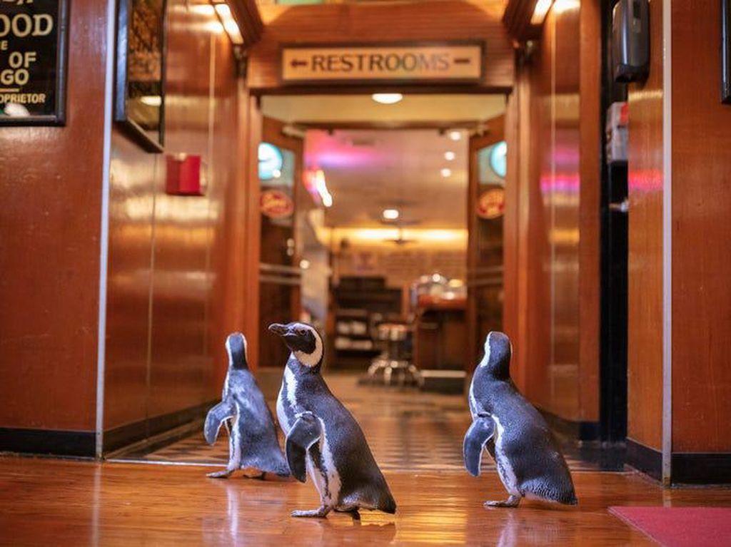 Jangan Mau Kalah! 3 Penguin Kampanye Kurangi Sampah Plastik, Nih