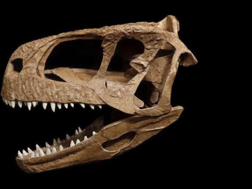 Ahli Paleontologi Temukan Kerangka Tengkorak T-Rex yang Tak Biasa