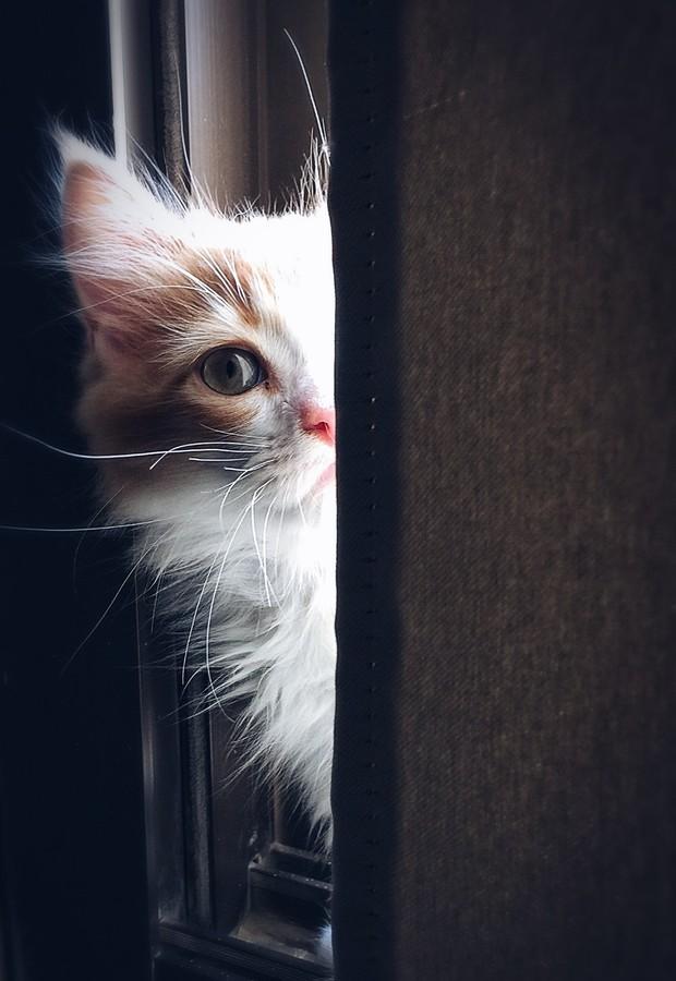 bawa ke dokter kucing