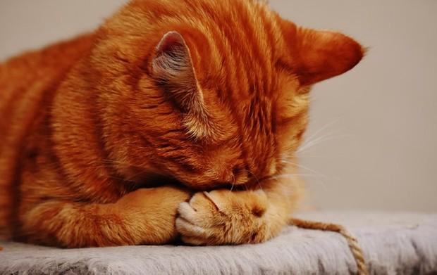 kucing sedang sakit