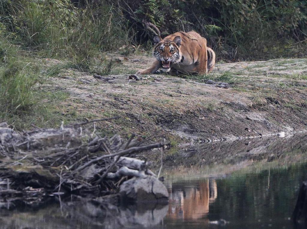 Melihat Satwa Liar Taman Nasional Terbesar di Nepal