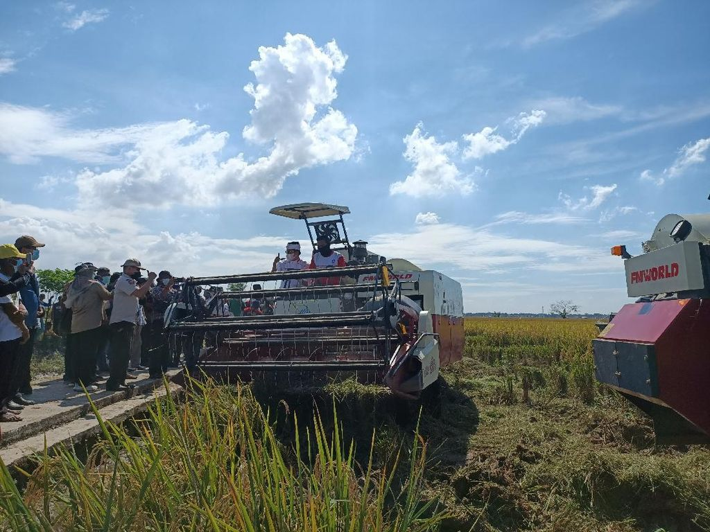 Dedi Mulyadi Minta Pemerintah Beli Gabah Petani 10% di Atas HPP