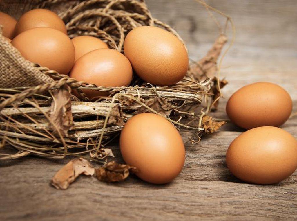 Tips Memilih Telur Ayam yang Baik Menurut Dinas Pertanian Kota Kediri