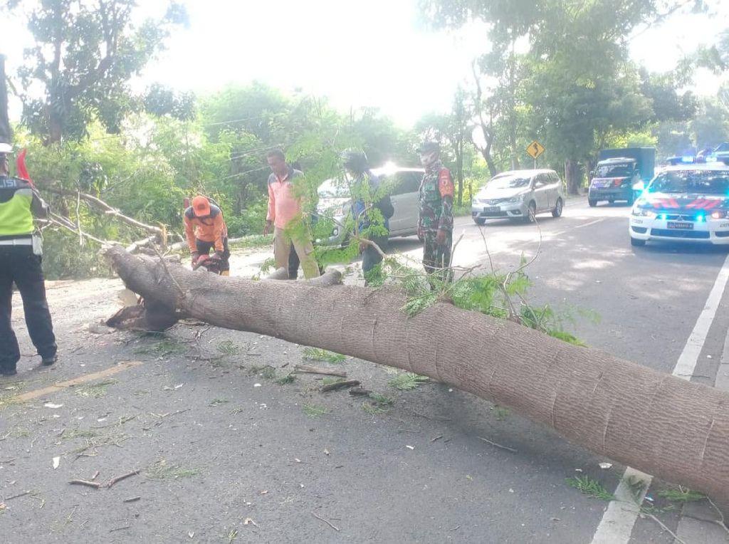 Pohon Tumbang Timpa Mobil di Pantura Situbondo, Satu Penumpang Dibawa ke RS
