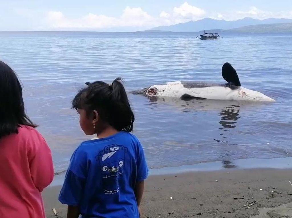 Seekor Paus Orca Ditemukan Mati di Pantai Bangsring Banyuwangi