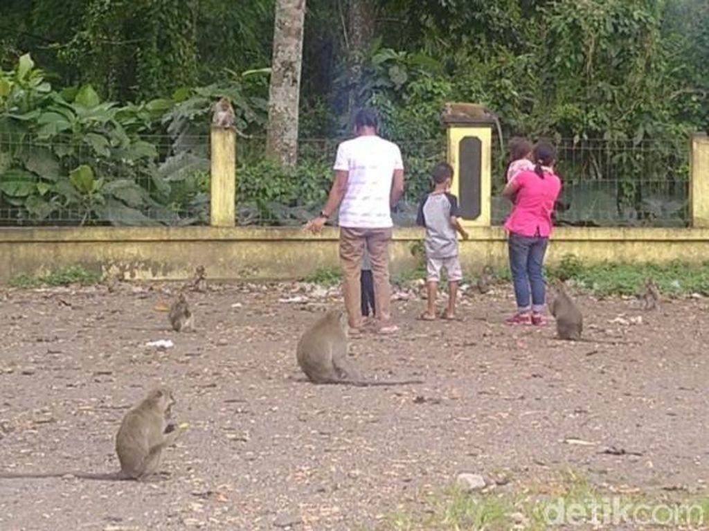 Unik! Rest Area Candi Batur yang Ramai Monyet dan Sarat Mitos