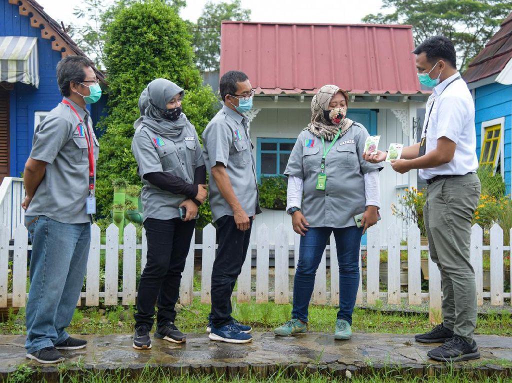 Budidaya Sayuran Hidroponik di Tengah Pandemi Naik Daun
