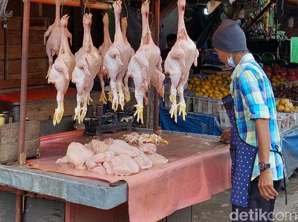 Terungkap! Ini Biang Kerok Harga Ayam Naik Terus, Bunda...