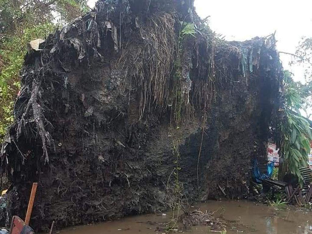 Heboh Pohon Raksasa Tumbang Berdiri Lagi di Sumut, 1 Orang Tewas-2 Luka
