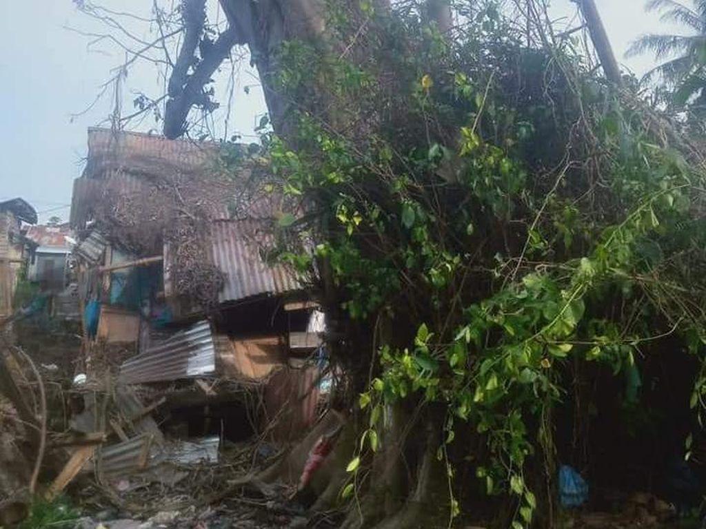 Saat Lurah Menepis Kabar Pohon Tumbang Berdiri Lagi Diselimuti Mistis