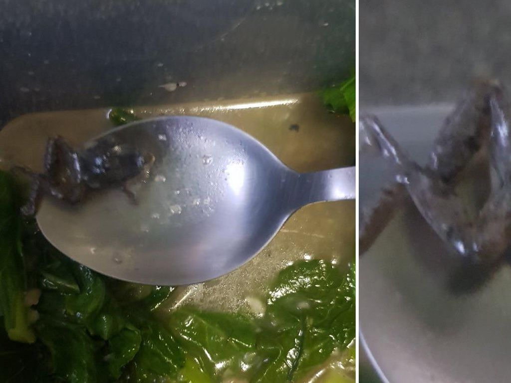Iyuhh! Pria Ini Temukan Katak Kecil di Tumisan Sayur Pesanannnya