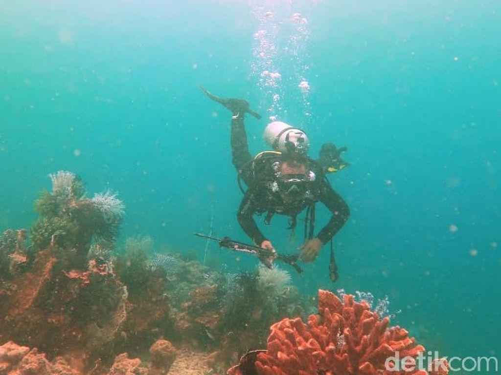 Jumpa Hiu Tutul di Bawah Laut Kalimantan Timur