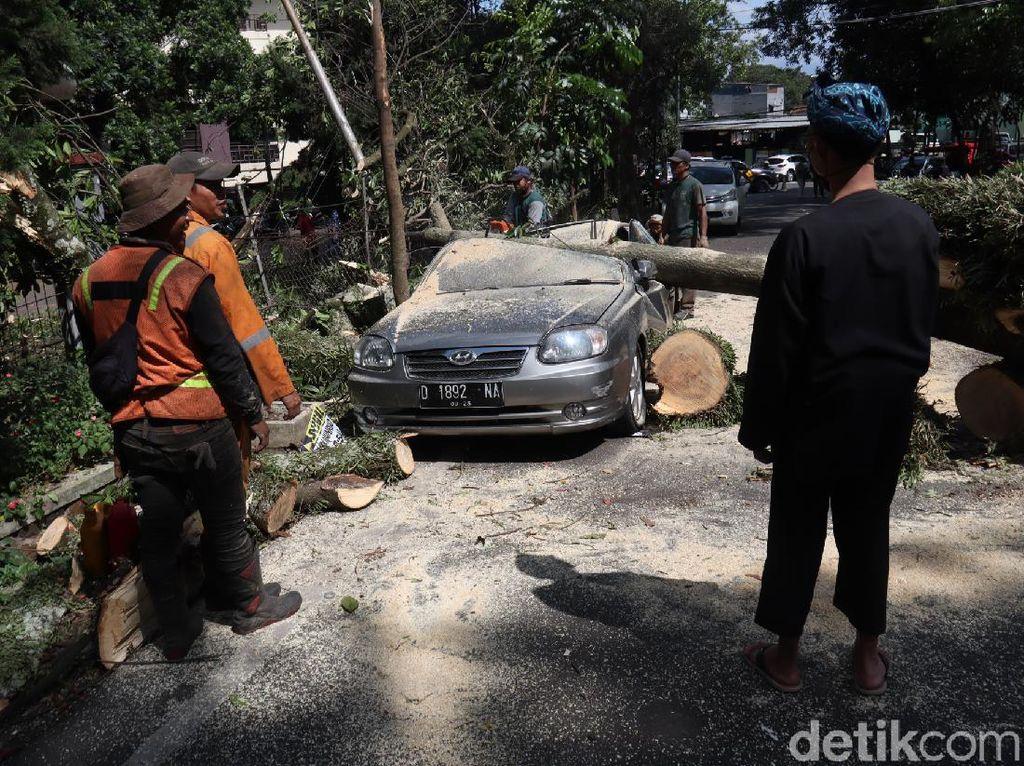 Pohon Tumbang Timpa Mobil di Bandung, 2 Orang Selamat