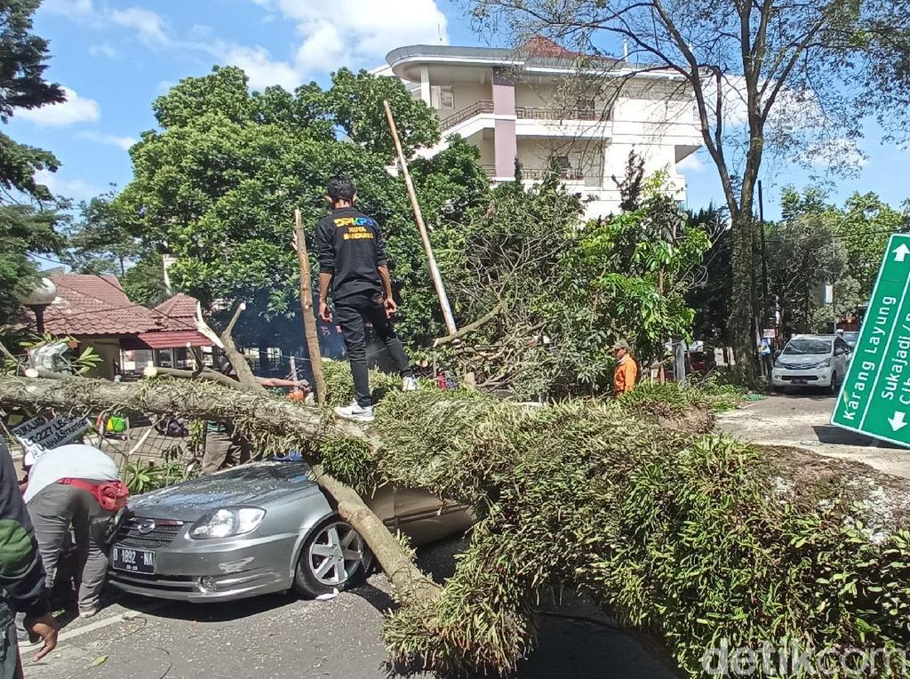Pohon Tumbang Timpa Dua Mobil di Bandung
