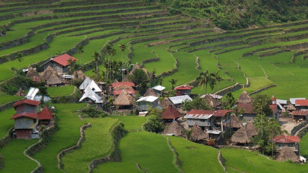 Foto Sawah Kuno yang Jadi Keajaiban UNESCO di Filipina
