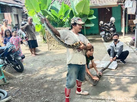 Ular piton sanca 4 meter ditangkap warga Desa Gribig Kecamatan Gebog, Sabtu (10/4/2021).