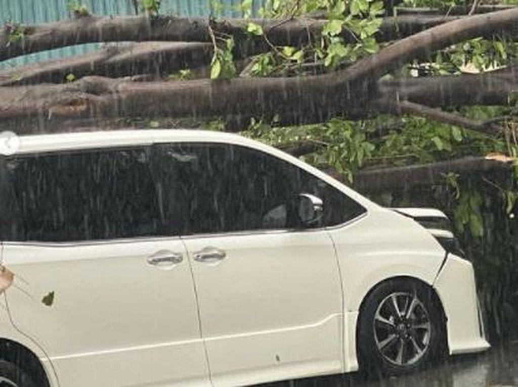 Mobil Erros Djarot Tertimpa Pohon Tumbang, Bisa Dicover Asuransi?
