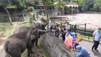 Minim Pemasukan, Selama Ramadhan GL Zoo Yogya Cuma Buka Akhir Pekan