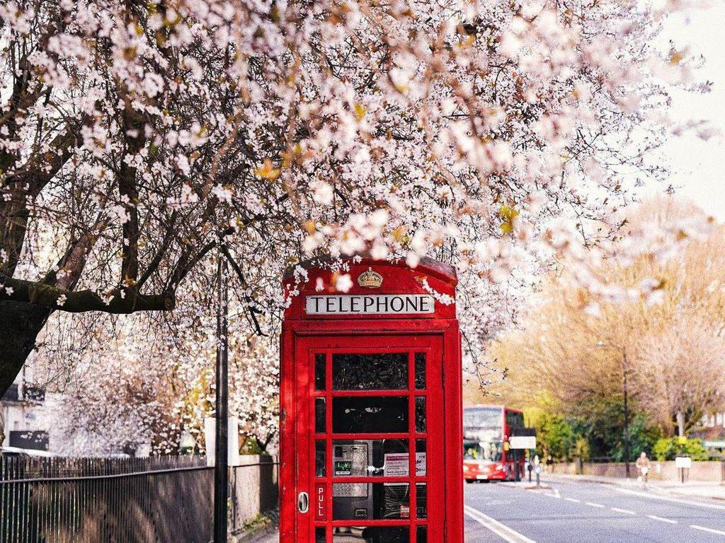 5 Kegiatan Seru di Inggris Saat Musim Semi