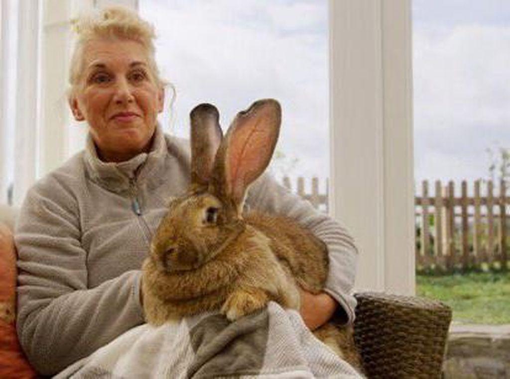 Saat Mantan Model Playboy Kehilangan Kelinci dan Sayembara Berhadiah Puluhan Juta