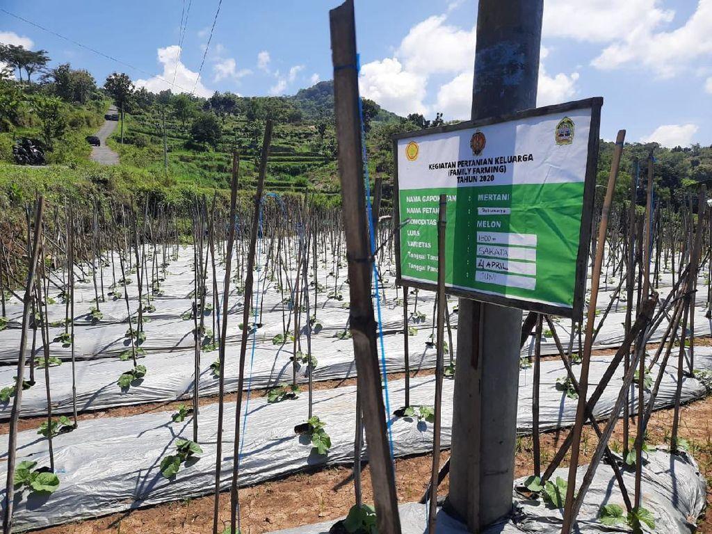 Peran Pertanian Keluarga untuk Ketahanan Pangan Nasional