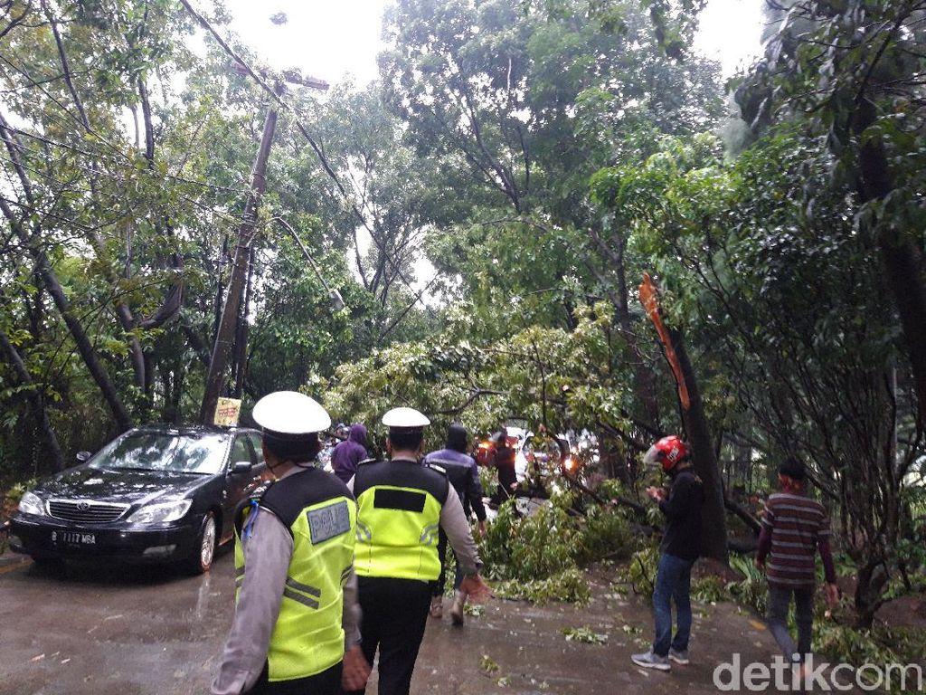 Imbas Hujan Deras, Pohon Tumbang Sempat Tutup Sebagian Jalan di Tangsel