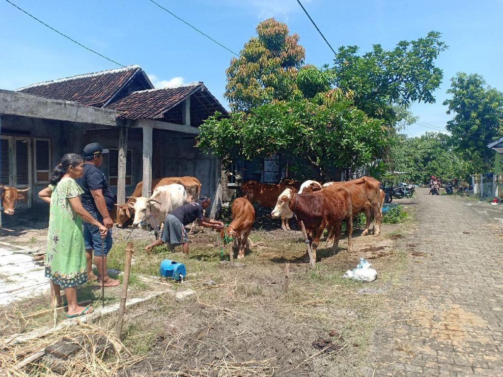 Warga Terdampak Banjir Saradan Madiun Ungsikan Puluhan Hewan Ternaknya