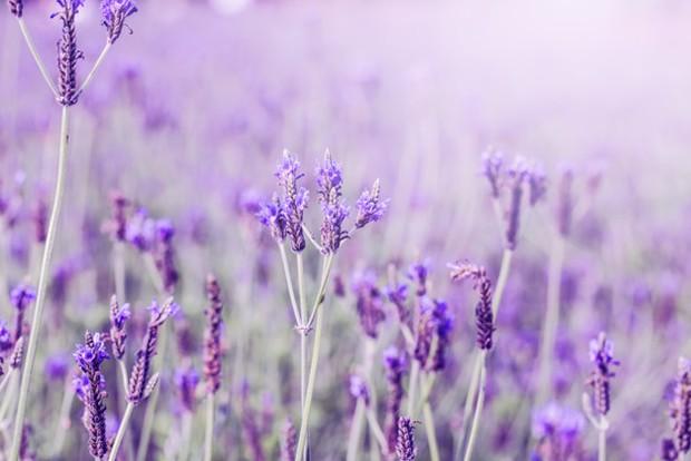 Jika kamu suka memakai produk beraroma lavender, ada kemungkinan besar kamu memiliki jaringan pertemanan yang erat dan baik.
