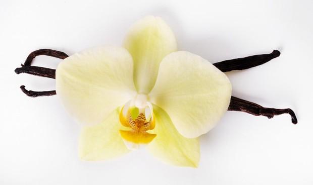 Orang yang menyukai vanilla adalah orang yang lincah, energik, dan menyukai kehidupan pesta
