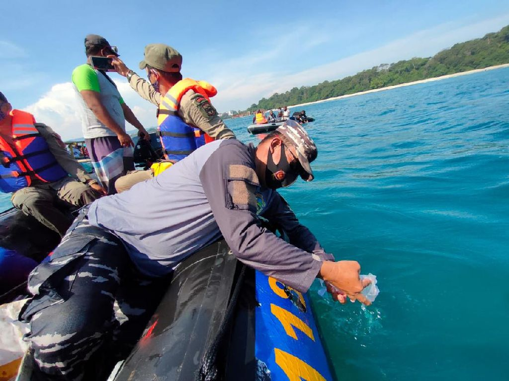 Ribuan Benih Lobster Hasil Razia Dilepasliarkan di Pantai Pangandaran