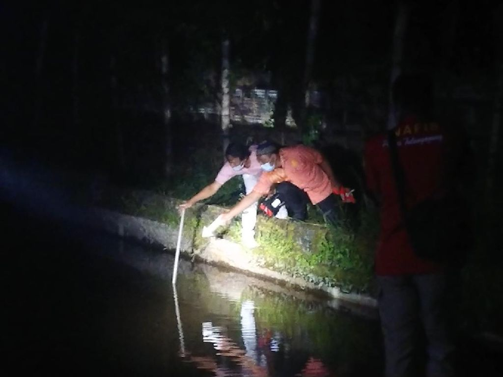 2 Bocah di Tulungagung Tewas Tenggelam dalam Kolam Ikan Koi