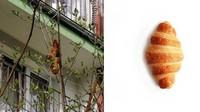 Bikin Heboh Warga! Benda Mencurigakan di Pohon Ini Ternyata Croissant