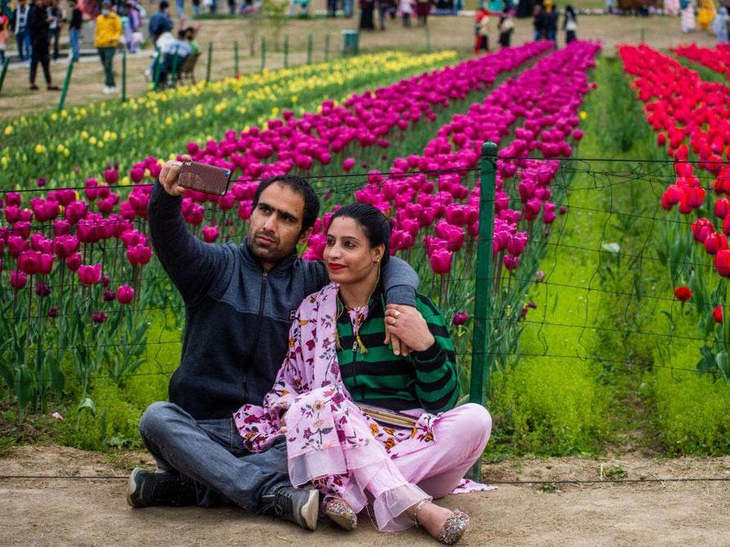 Cantiknya Bunga Tulip yang Bermekaran di India