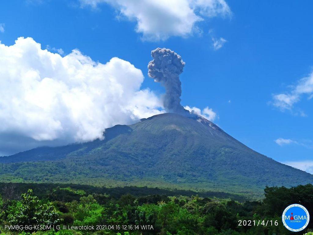 Gunung Ili Lewotolok NTT Erupsi